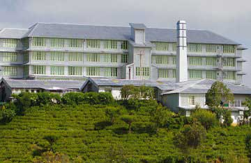 White Tea Factory
