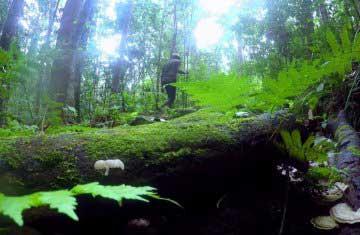 Kottawa Rainforest